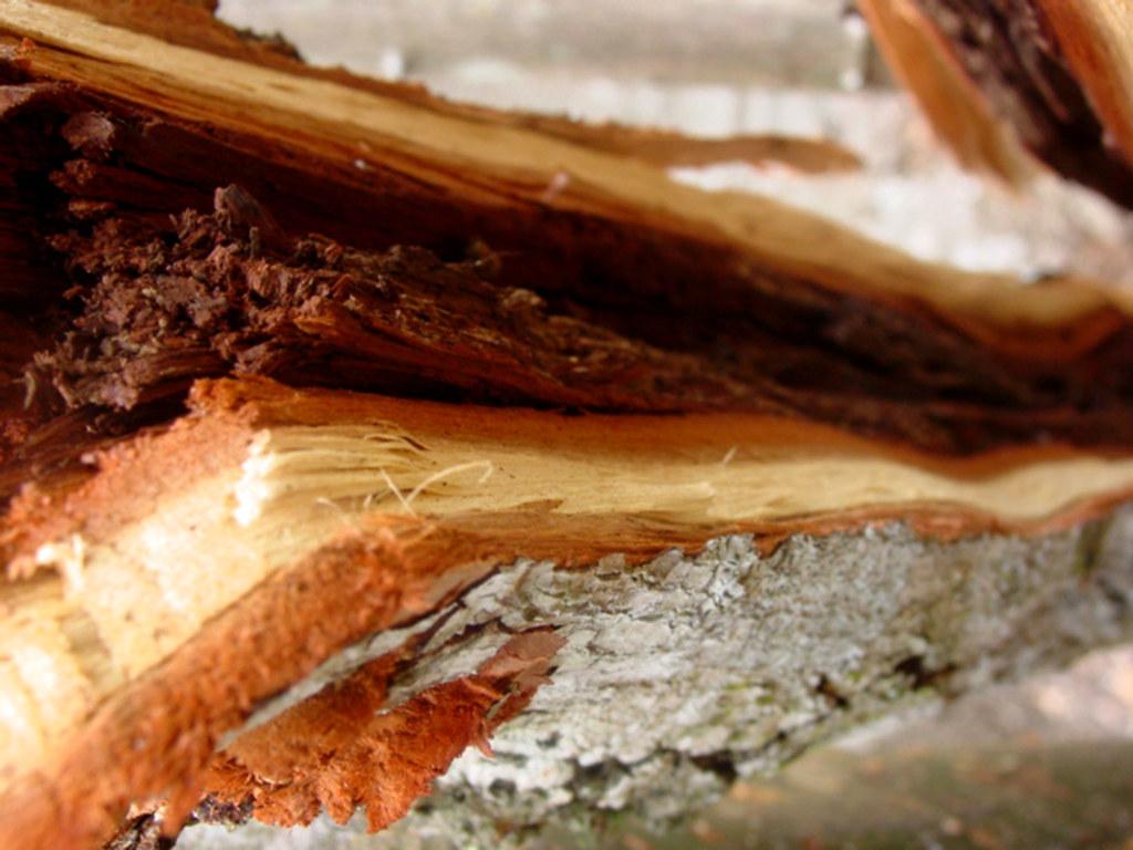 madera y leña en primer plano